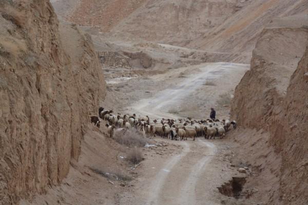 Deserto Cisgiordania-Palestina