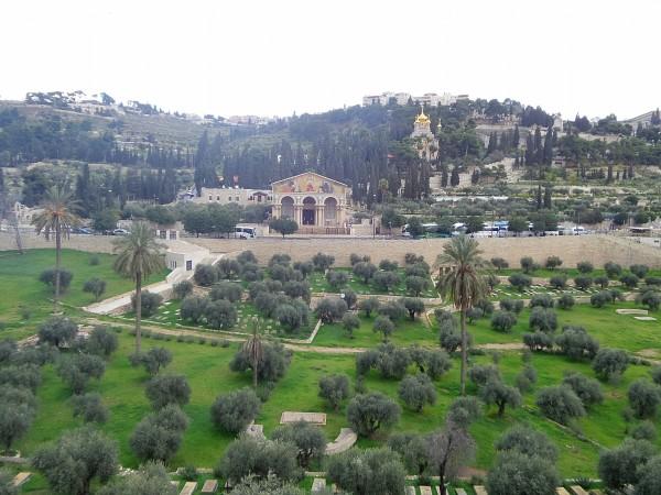 Giardino dei Getsemani - Gerusalemme