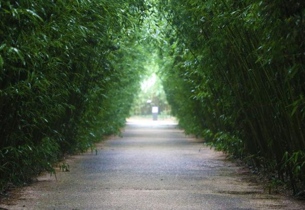 Labirinto della Masone - Fontanellato - Parma