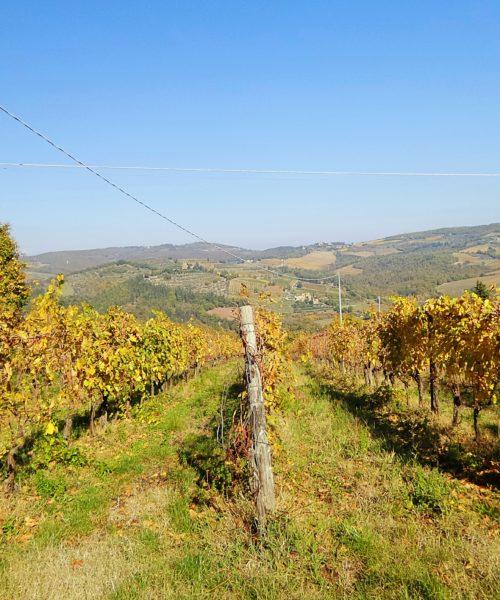 Volpaia - Toscana