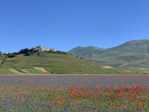 Fioritura - Castelluccio di Norcia - Umbria